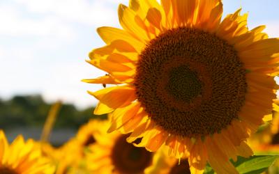 Sunstroke, Heat Exhaustion & Sunburn