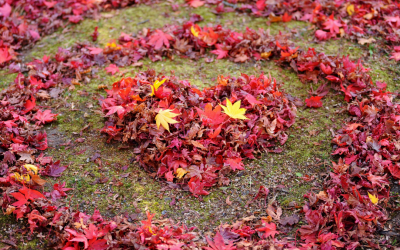 Autumn. A time to love your immune system.