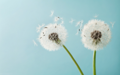 Homeopathic help for hay fever